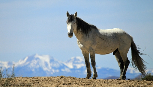 Comanche; La Sal Mountains
