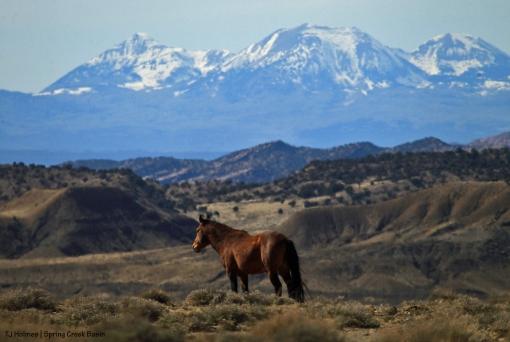 Tenaz; La Sal Mountains