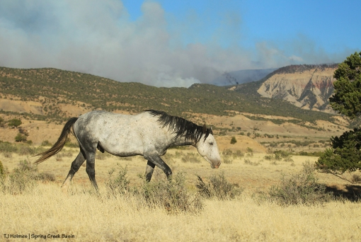 Skywalker; Horse Park Fire
