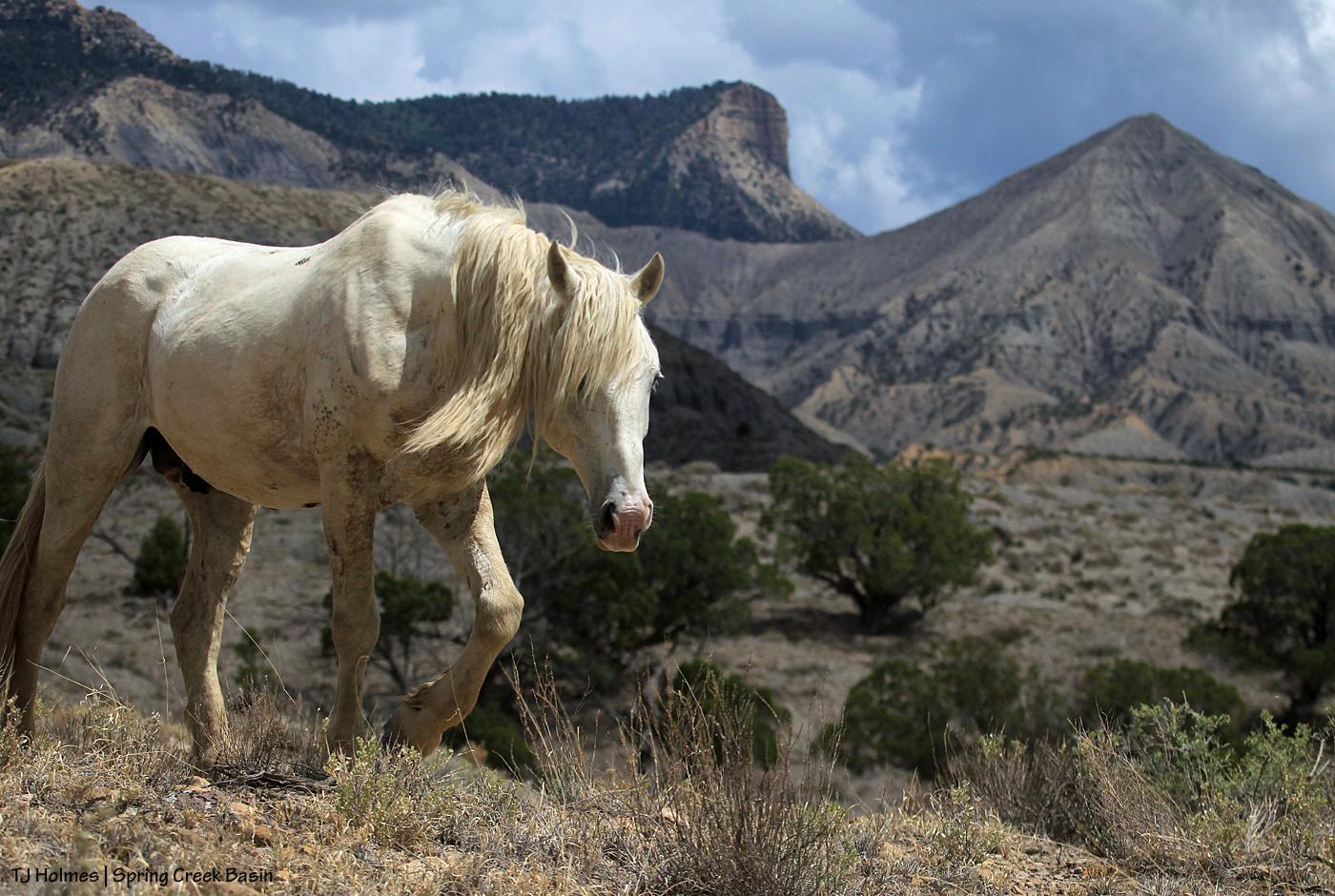 Sundance; McKenna Peak and Temple Butte