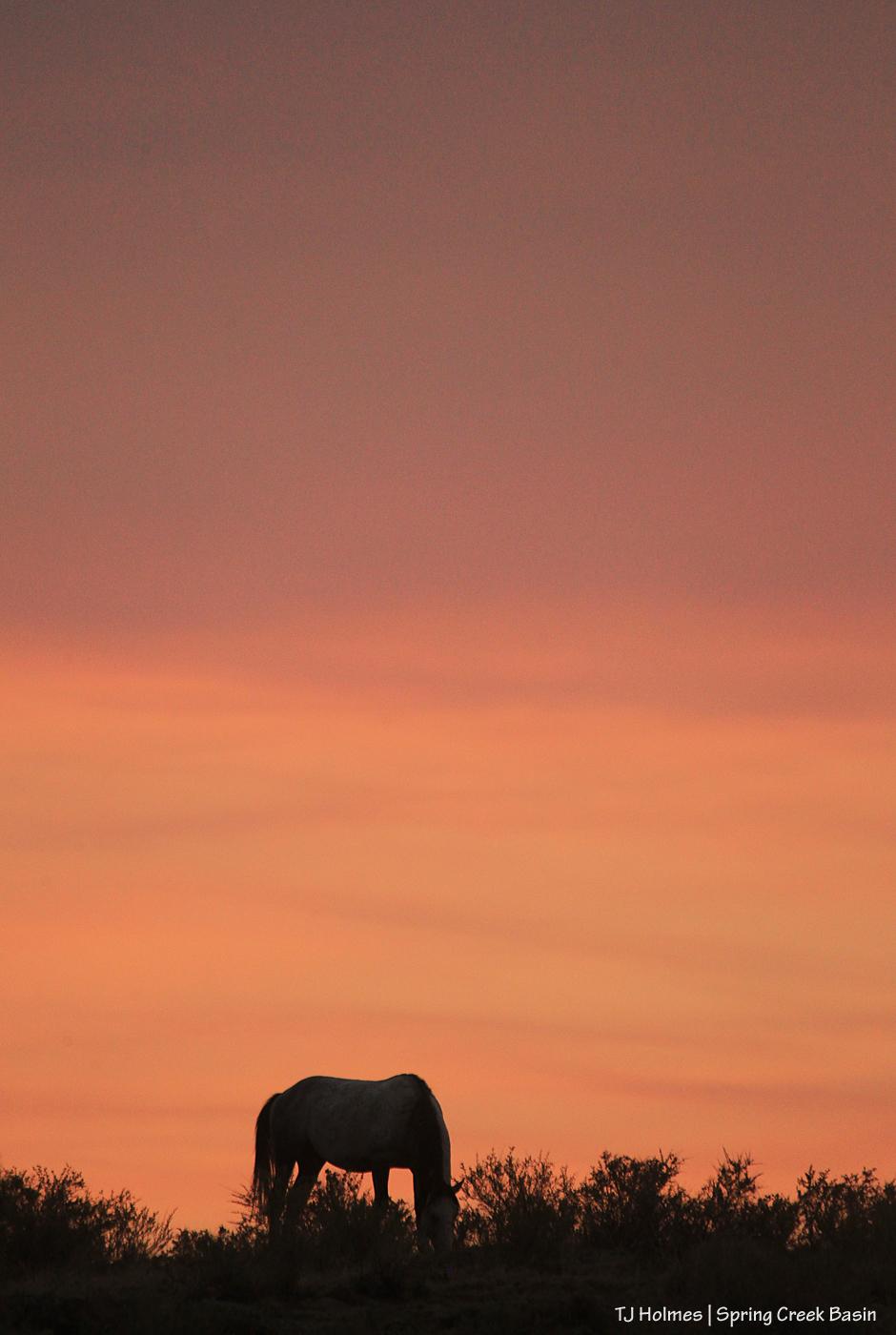 Skywalker, smoky sunset