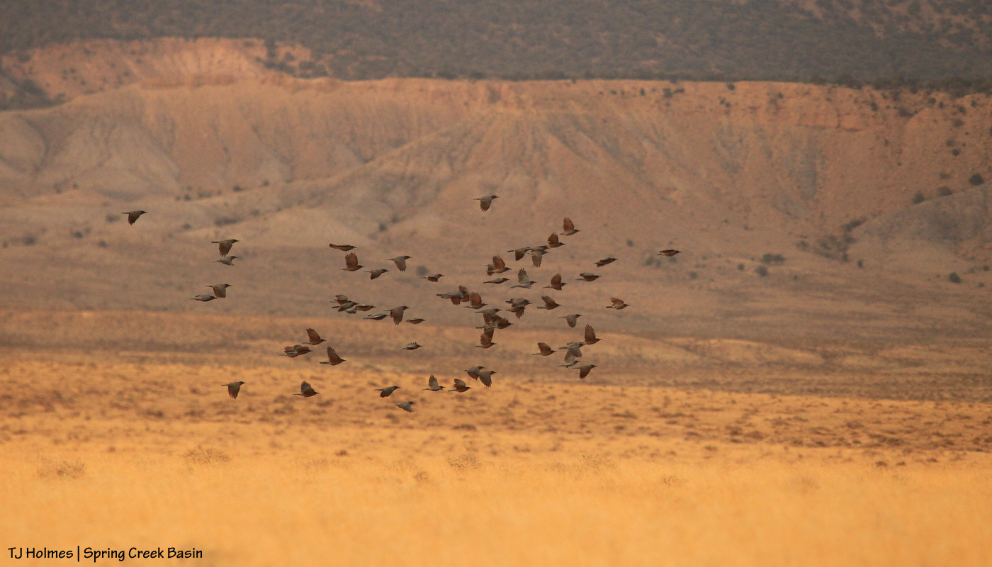 Birds in Spring Creek Basin