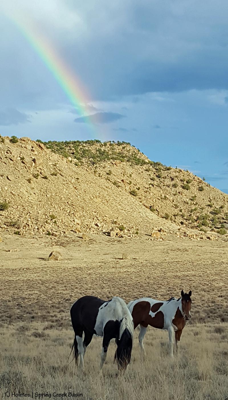Puzzle and Spirit under the rainbow.