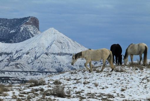 Comanche, Aurora and Terra; McKenna Peak and Temple Butte