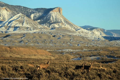 Mule deer; Temple Butte and McKenna Peak