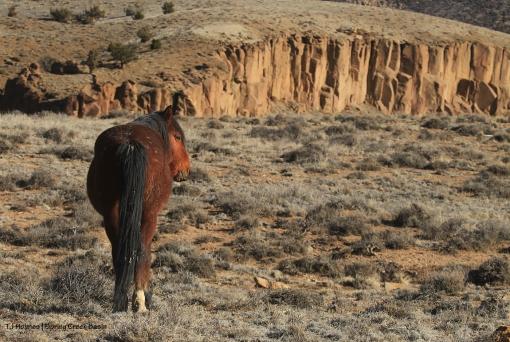 Tenaz; Spring Creek canyon