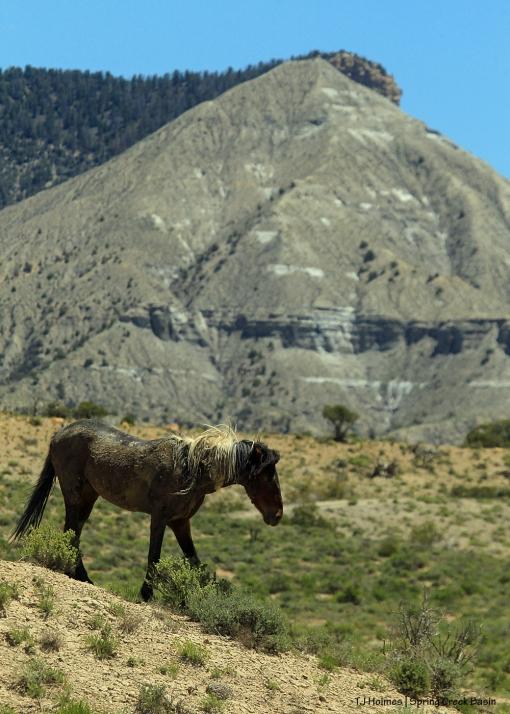 S'aka; McKenna Peak (barely seen, Temple Butte)