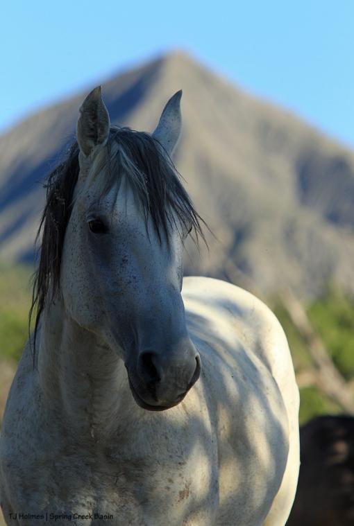 Comanche; McKenna Peak